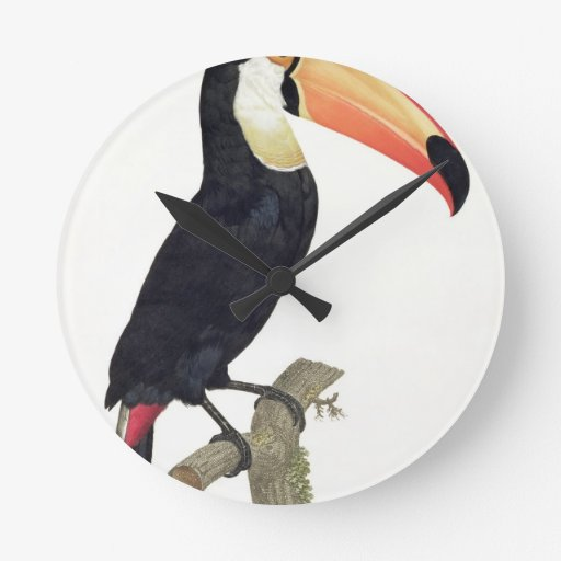 Toucan No.2, from 'History of the Birds of Paradis Round Wallclock
