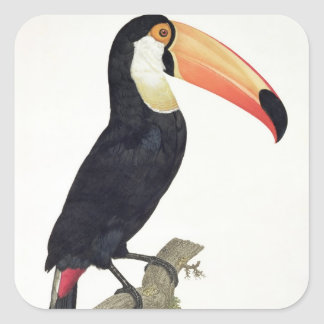 Toucan No.2, from 'History of the Birds of Paradis Square Sticker