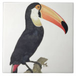 Toucan No.2, from 'History of the Birds of Paradis Ceramic Tiles