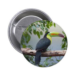 Toucan Photo Pin