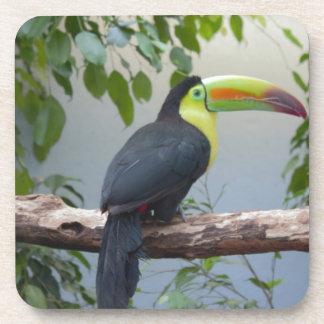 Toucan Photo Drink Coaster