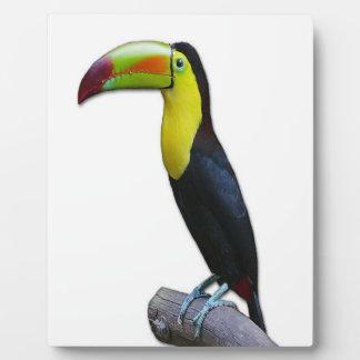 Toucan Placas