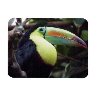 Toucan Rectangular Photo Magnet