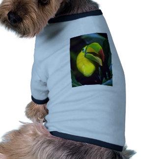 toucan Quilla-cargada en cuenta Camisetas Mascota