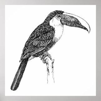 Toucan Realistic Bird Cartoon Poster