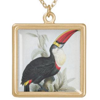 Toucan Rojo-Cargado en cuenta, 'de una monografía  Collar Dorado