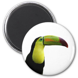 Toucan tropical animal colorful photo magnet