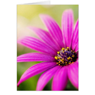 Touched By The Sun Greeting Card