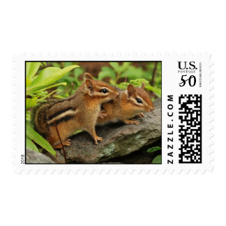 Touching Baby Chipmunk Siblings Postage