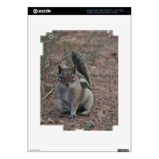 Tough Squirrel Skins For iPad 3