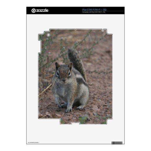 Tough Squirrel iPad 2 Skins