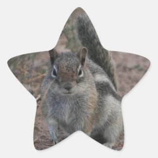 Tough Squirrel Star Sticker