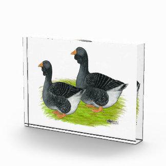 Toulouse Dewlap Geese Acrylic Award