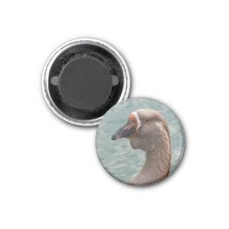 Toulouse Goose 1 Inch Round Magnet