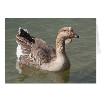 Toulouse Goose Card