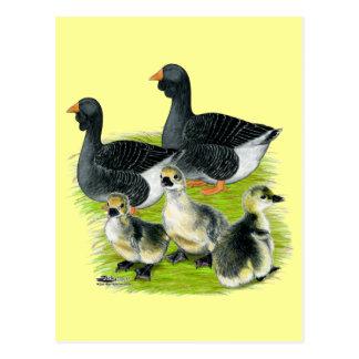 Toulouse Goose Family Postcard