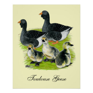 Toulouse Goose Family Poster