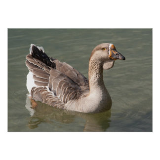 Toulouse Goose Poster