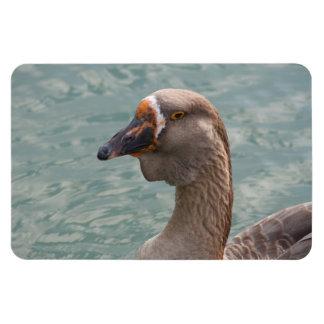 Toulouse Goose Rectangular Photo Magnet