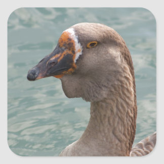 Toulouse Goose Square Sticker