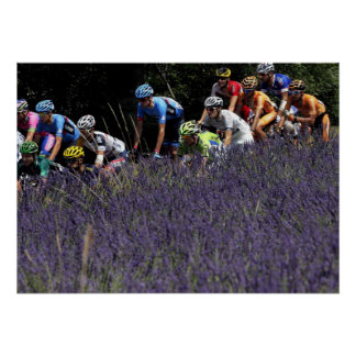 Tour de France in the lavenders Poster