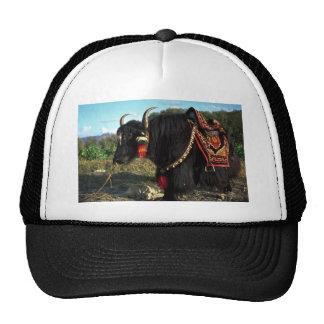 Tourist yak, Tibet Mesh Hat