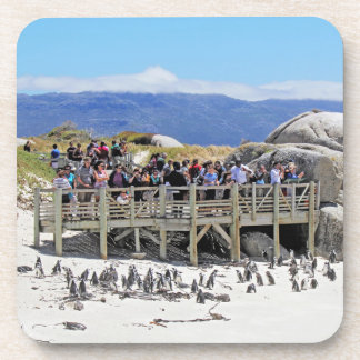 Tourists at Boulders Beach looking at penguins Beverage Coasters