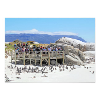 Tourists at Boulders Beach looking at penguins Custom Invites