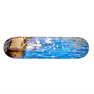 Tourists enjoying the sight of Swans Skateboard Deck