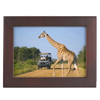 Tourists Watching Giraffe Keepsake Box