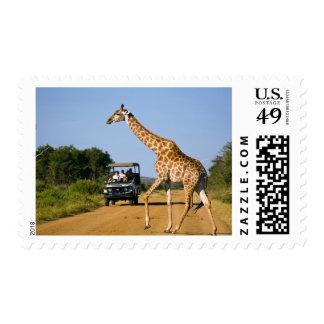 Tourists Watching Giraffe Postage Stamp