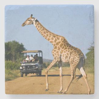 Tourists Watching Giraffe Stone Coaster