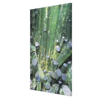 Tourmaline Elbaite crystals on Quartz Canvas Print