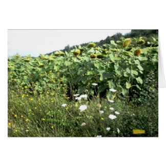 Tournesols and wild flowers card