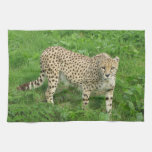 Towel - cheetah