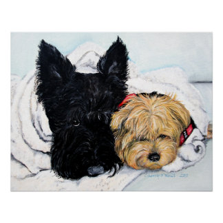 Toweling Off! Scottie and Yorkie Buddies Print