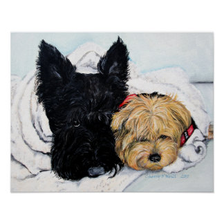 Toweling Off! Scottie and Yorkie Buddies Poster