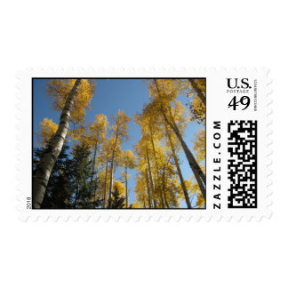 Towering Aspens (10) Postage Stamps