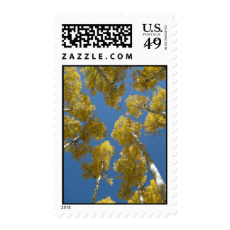 Towering Aspens (14) Postage Stamps