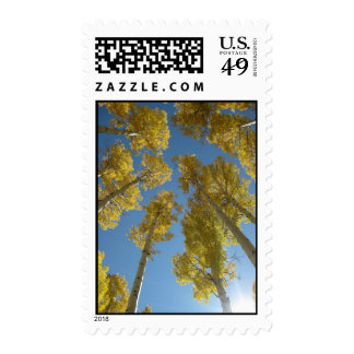 Towering Aspens (16) Postage Stamps