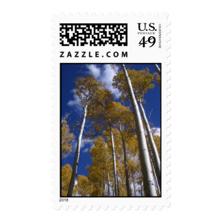 Towering Aspens (1) Postage Stamps