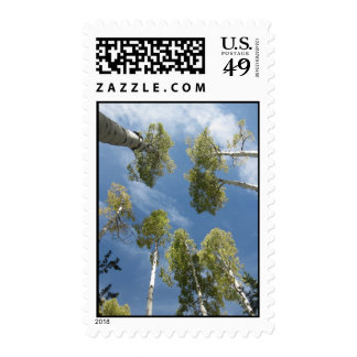 Towering Aspens (3) Postage Stamps