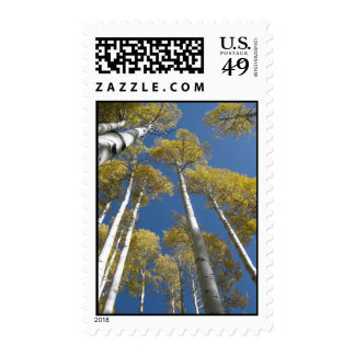 Towering Aspens (5) Postage Stamps