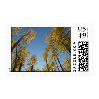 Towering Aspens (9) Postage Stamps