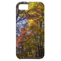 Towering Fall Trees iPhone 5 Cases