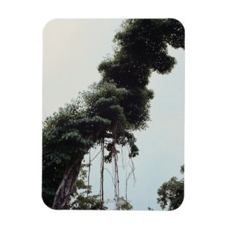Towering tree and vines in jungle rectangular photo magnet