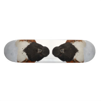 Towhee in snow skateboard deck