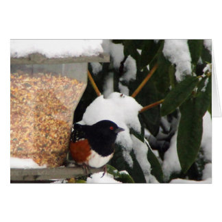 Towhee in The Snow Card