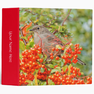 Townsend's Solitaire on the Pyracantha Binder