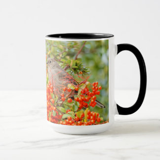 Townsend's Solitaire on the Pyracantha Mug